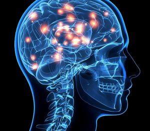 εγκέφαλο