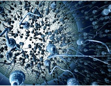 Ανδρική (υπο)γονιμότητα & Βιοψία Όρχεως: Τι μπορεί να μας δείξει η ανάλυση σπέρματος;