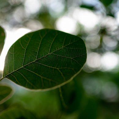 Το πρώτο φυτό εσωτερικού χώρου που καθαρίζει τον αέρα από καρκινογόνες ουσίες